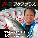 愛媛県宇和島市|宇和海の新鮮なお魚をお届けするアクアプラス